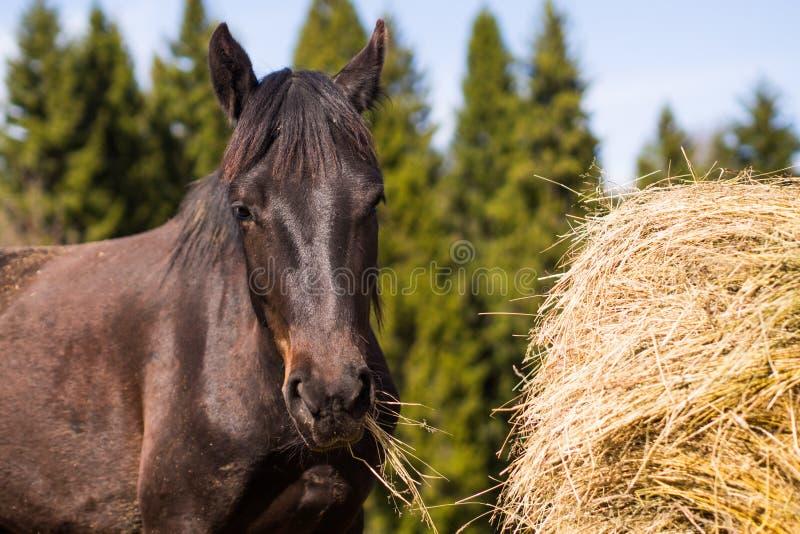 Häst i lös natur fotografering för bildbyråer