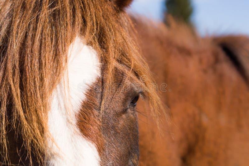 Häst i lös natur royaltyfri foto