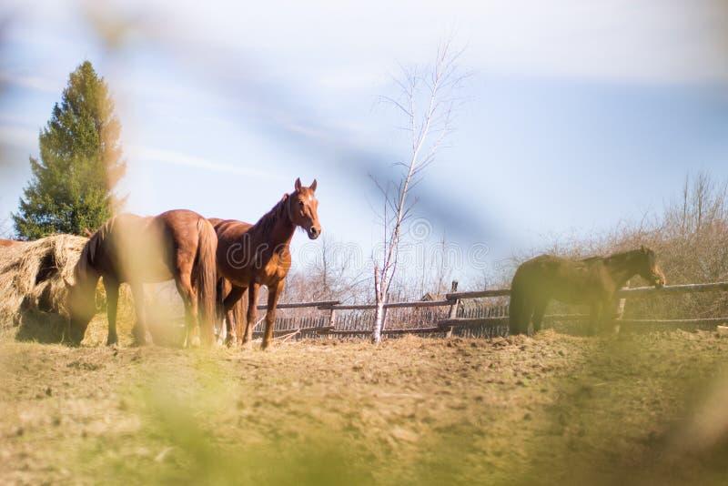 Häst i lös natur royaltyfria foton
