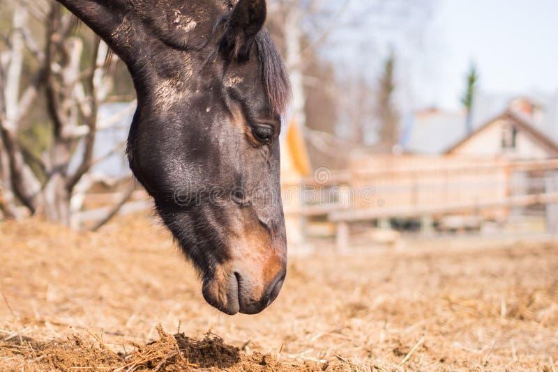 Häst i lös natur royaltyfri fotografi