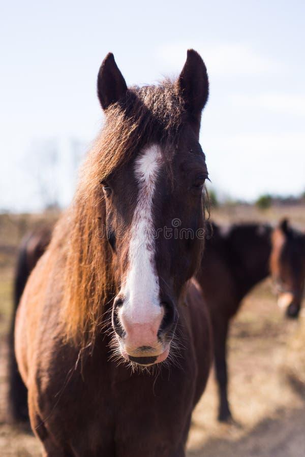 Häst i lös natur royaltyfri bild