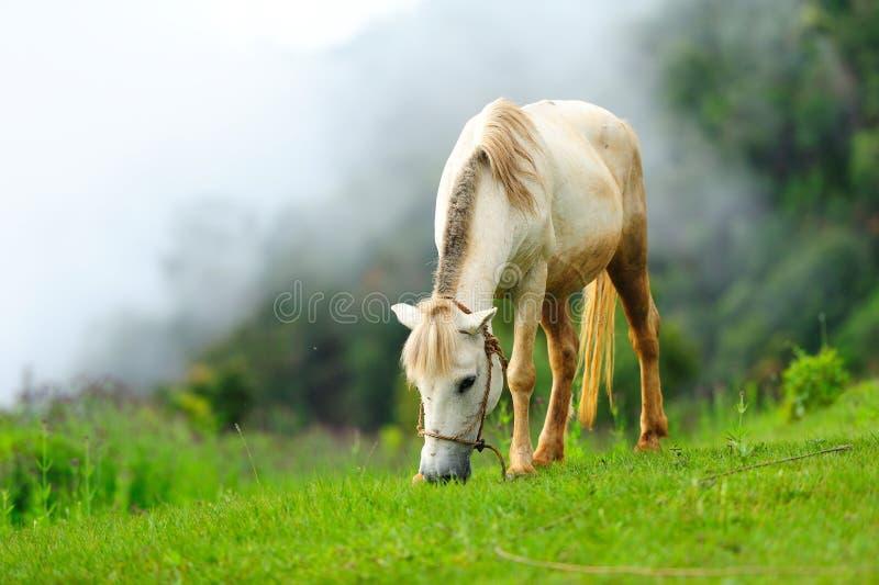 Häst i misten arkivfoto