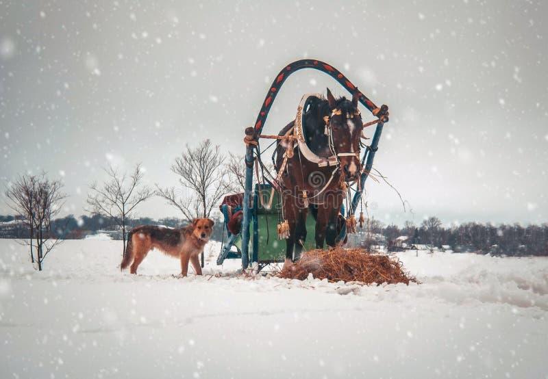 Häst i sele med den röda hunden royaltyfri foto