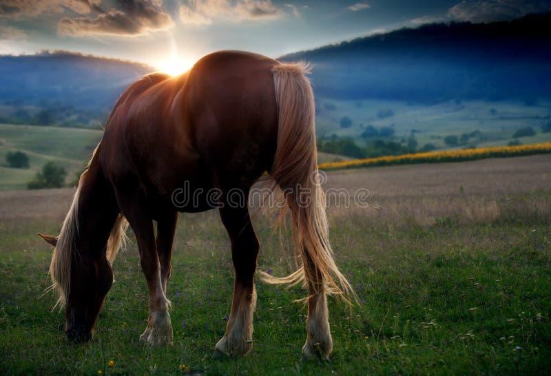 Häst i solnedgång royaltyfria bilder
