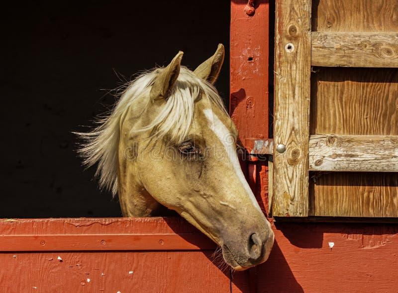 häst i stable fotografering för bildbyråer
