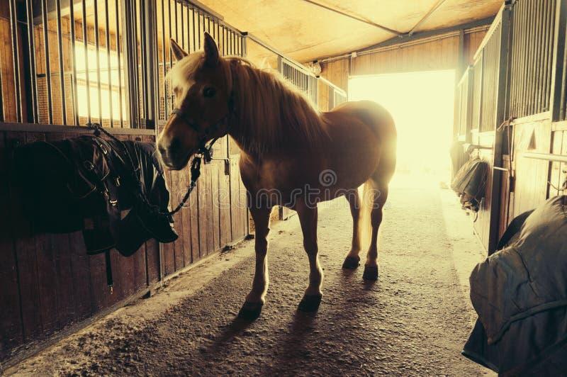 häst i stable royaltyfri fotografi