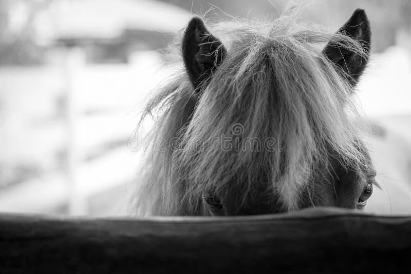 häst i stable arkivbilder