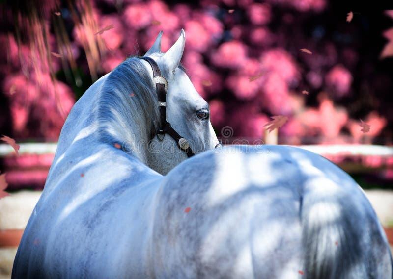 Häst i trädgården royaltyfri foto