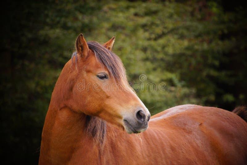 Häst i Tyskland fotografering för bildbyråer
