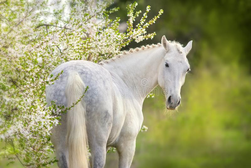 Häst i vårblomningträd royaltyfri foto