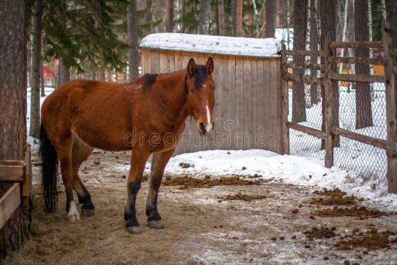 Häst i vinterskog royaltyfri fotografi