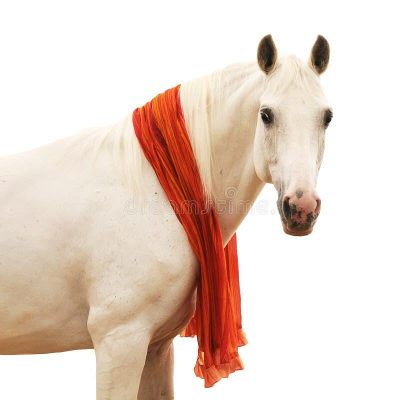 Häst Isolerad Ståendewhite Royaltyfri Fotografi