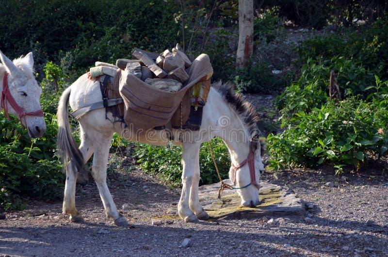 Häst laden med stenar royaltyfri fotografi