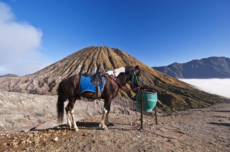 Häst med berg som en bakgrund royaltyfria bilder