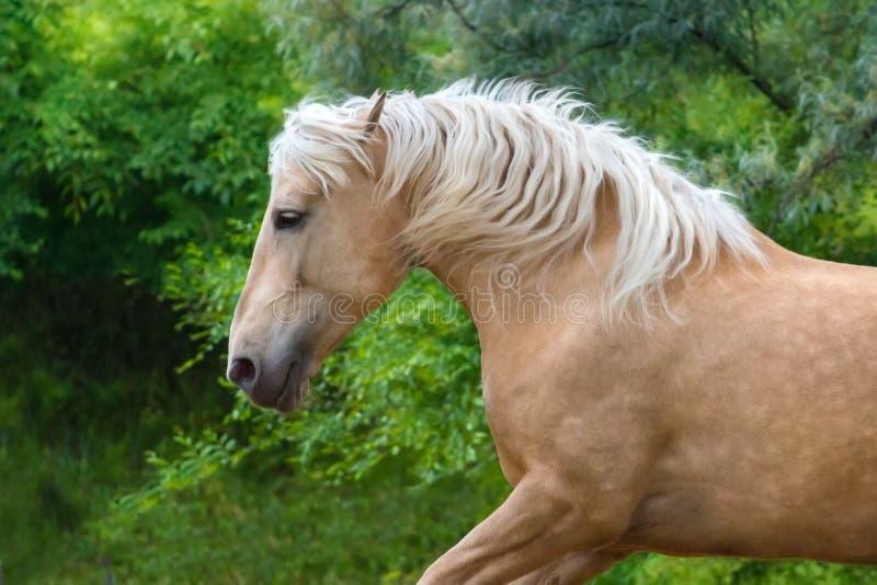 Häst med blond man arkivfoto