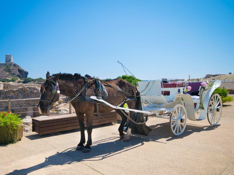 Häst med den gamla vita trävagnen under ett bröllop på havet arkivfoto