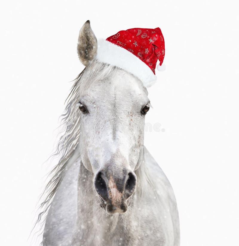 Häst med den santa hatten på vit bakgrund arkivbilder
