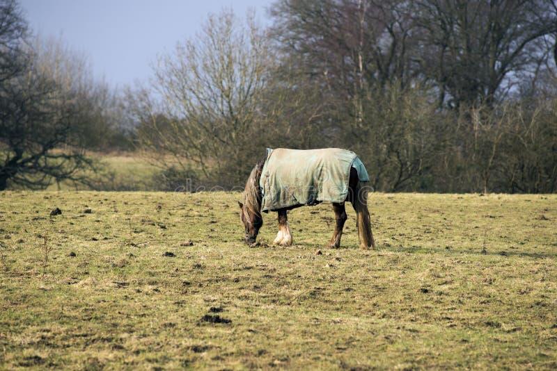 Häst med horsecloth royaltyfri fotografi