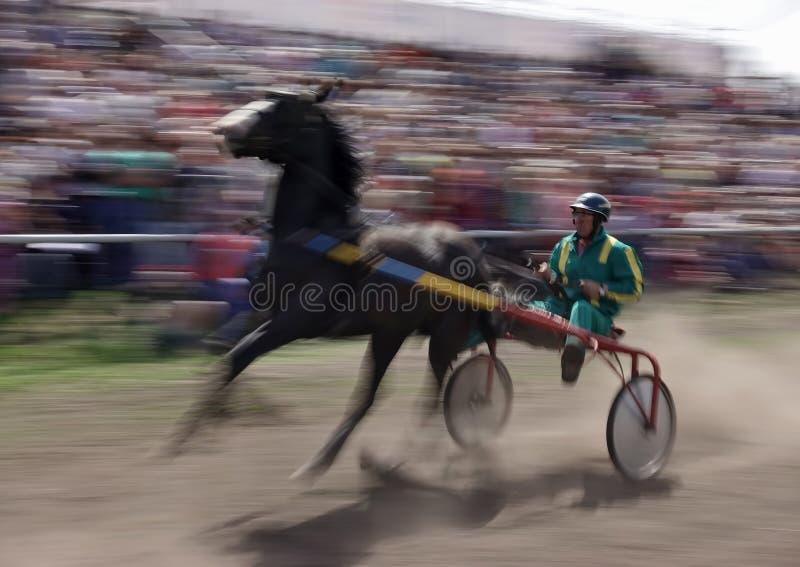 Häst med vagnen och ryttare i rörelse på löparbana royaltyfri bild
