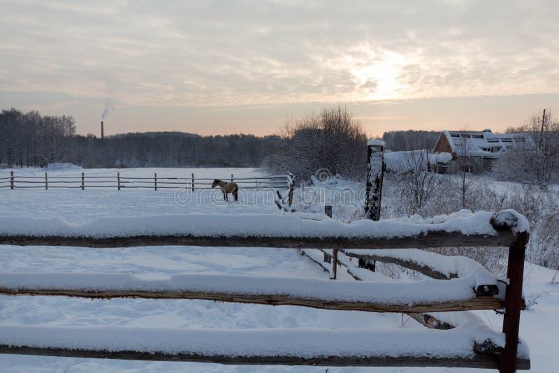 Häst nära staketet i vintertid royaltyfri bild