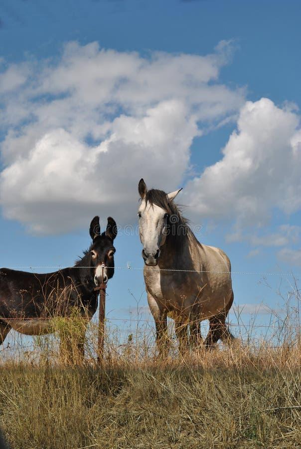 Häst och burro i fältet arkivbild