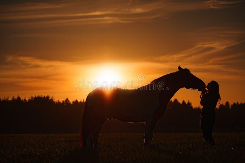 Häst och flicka på solnedgången arkivbild
