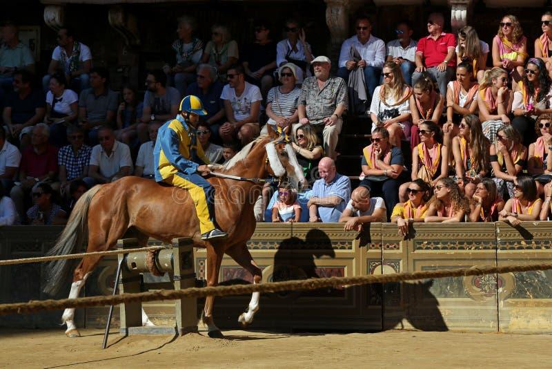 Häst och ryttare i Palio av Siena, Italien royaltyfri foto