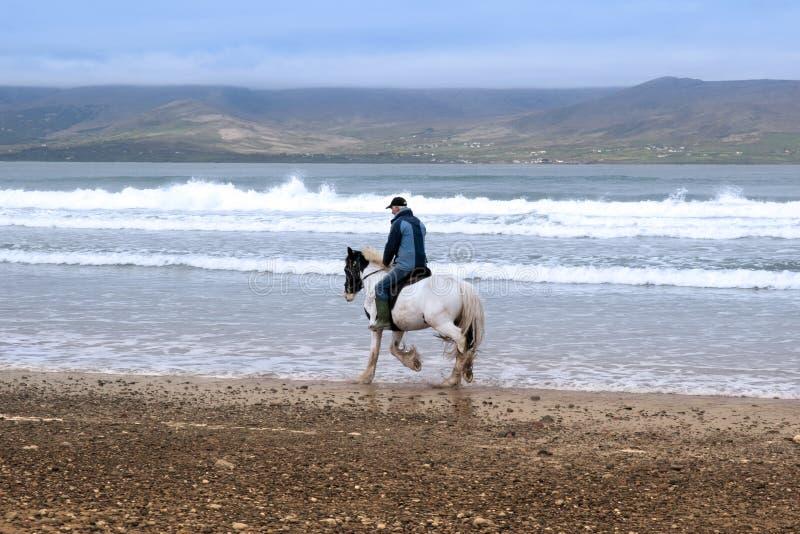 Häst och ryttare på mahareesstranden arkivfoton