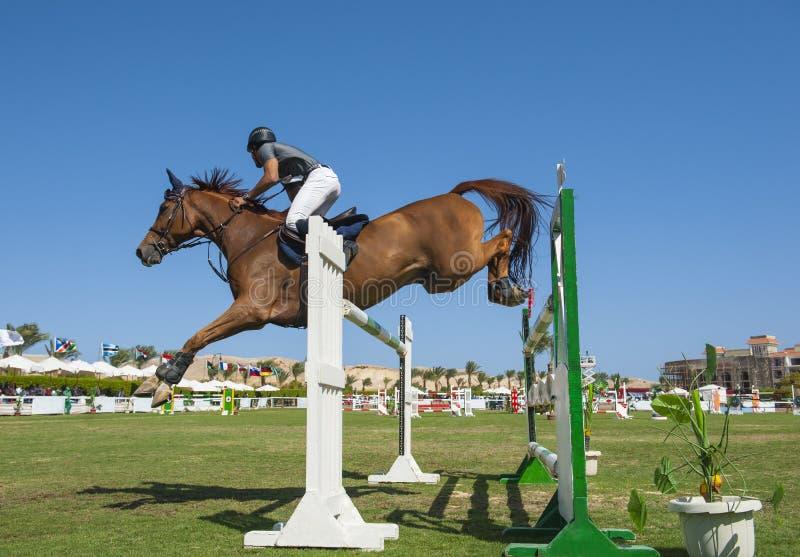 Häst- och ryttarebanhoppning i rid- konkurrens arkivbilder