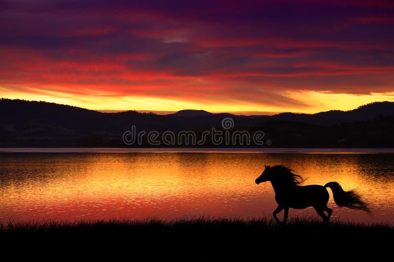 Häst och solnedgång arkivbild