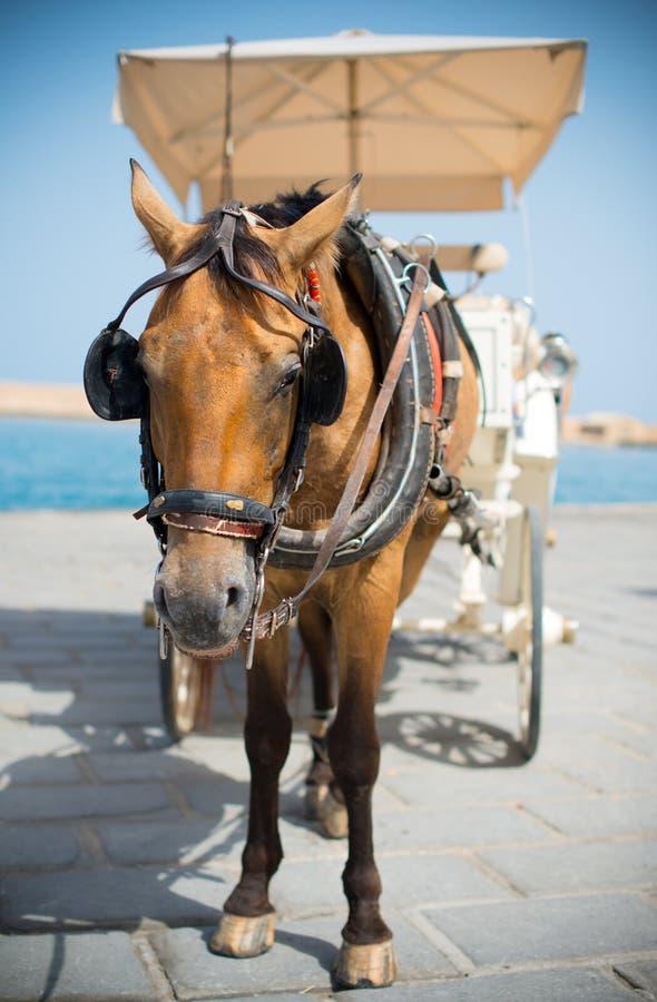 Häst och tappningvagn arkivbilder