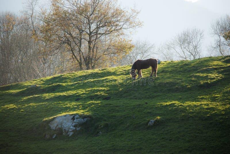 Häst på bergäng arkivfoto