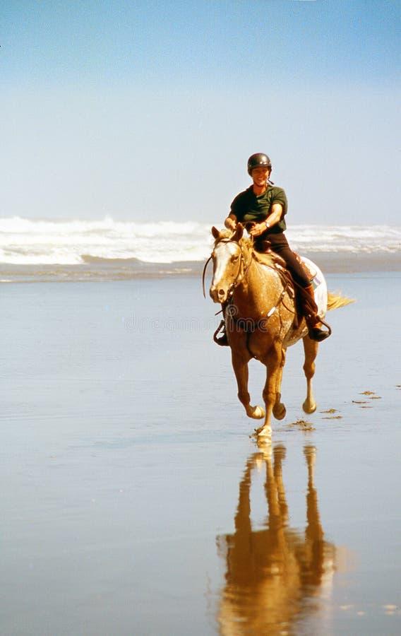 Häst på bränningstranden royaltyfria bilder
