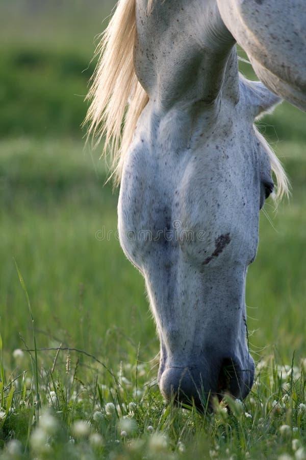 Häst på en lantgård. royaltyfria foton