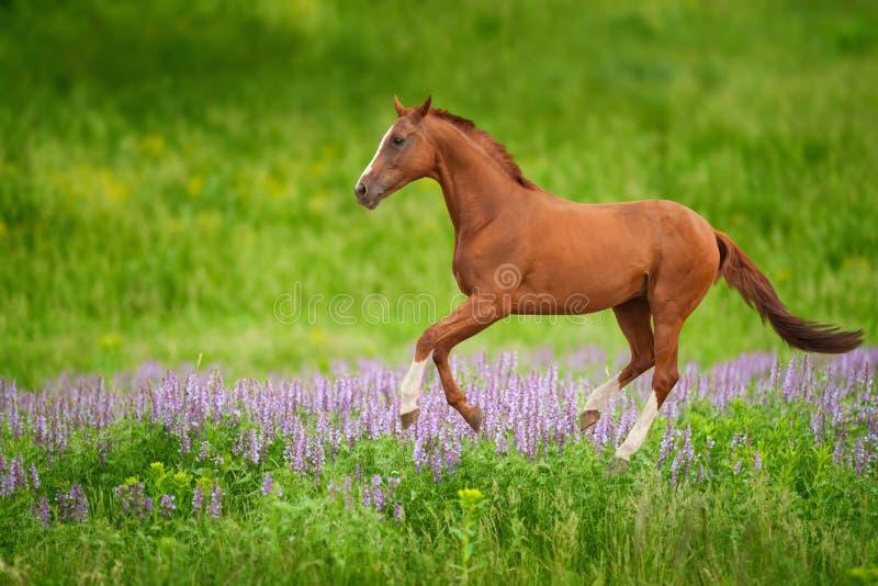 Häst på grön äng arkivbilder