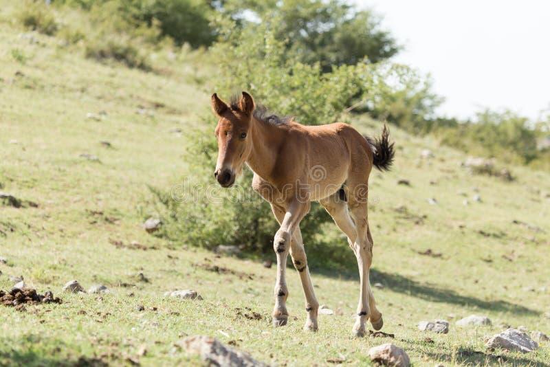 Häst på naturen royaltyfria bilder