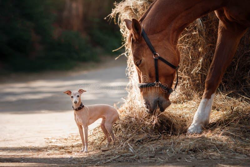 Häst på naturen Ståenden av en häst, den bruna hästen, häst står i paddocken royaltyfri bild