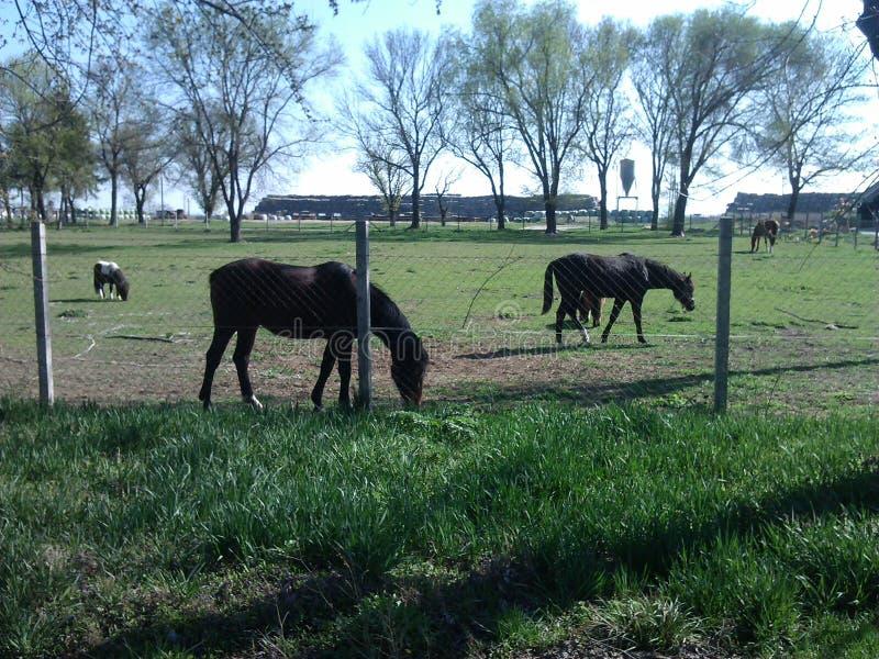 Häst på semester royaltyfri fotografi