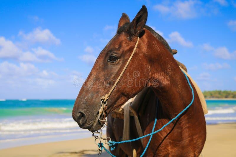 Häst på stranden arkivfoton