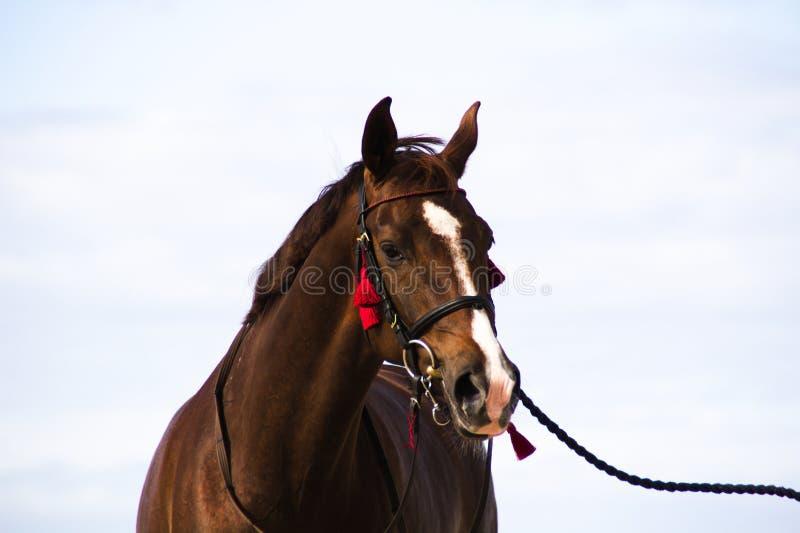 Häst på suddig bakgrund arkivfoton