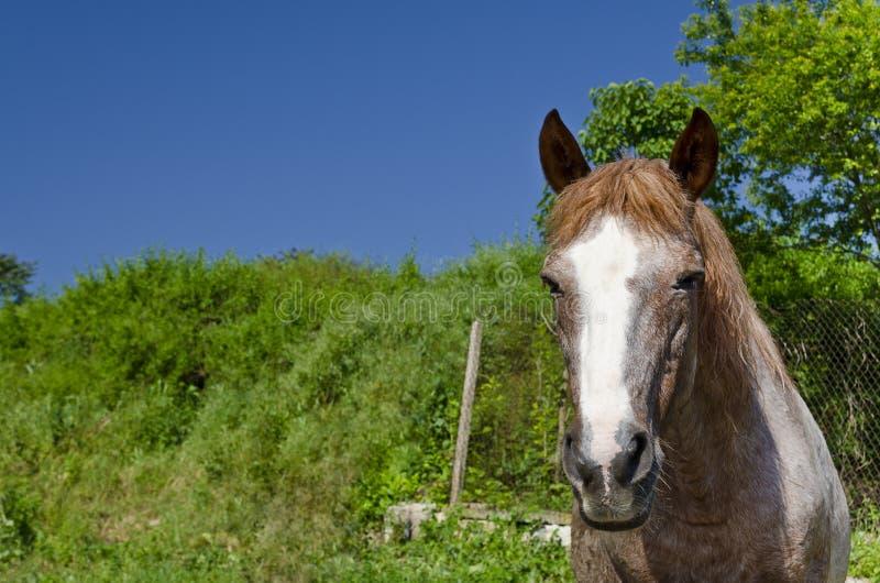 Häst på vägen royaltyfri fotografi