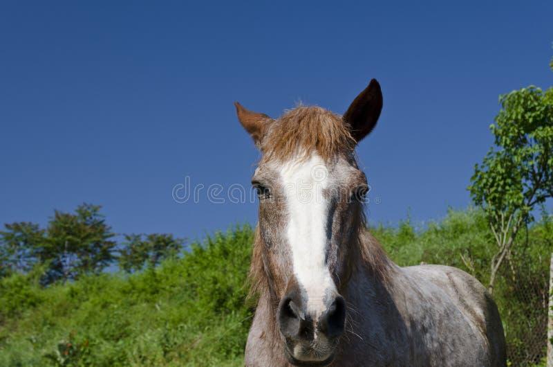 Häst på vägen arkivbilder