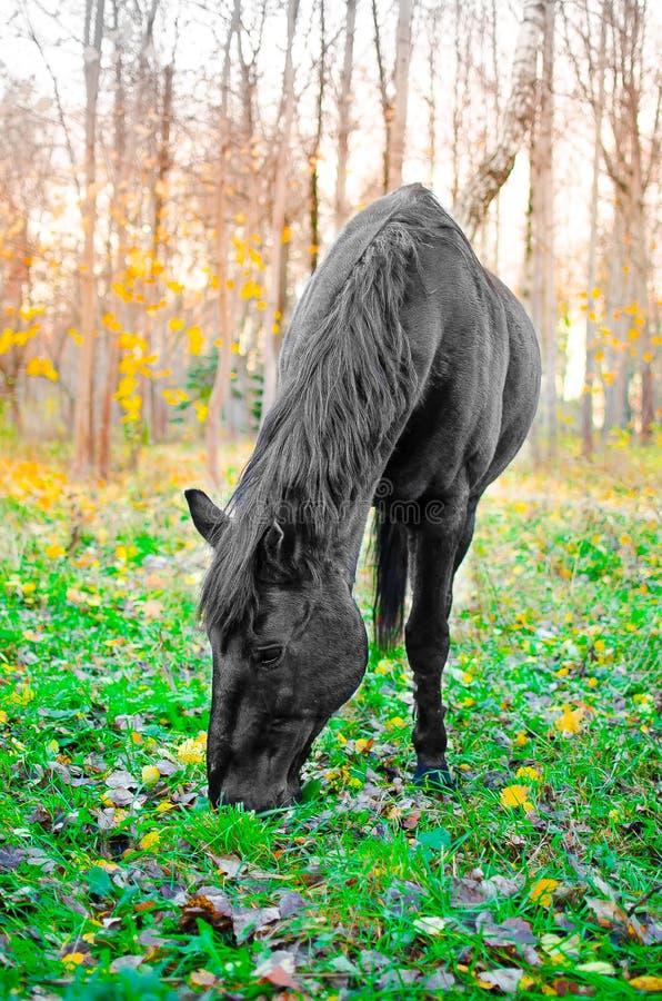 Häst som äter gräs i skogen, grund DOF fotografering för bildbyråer