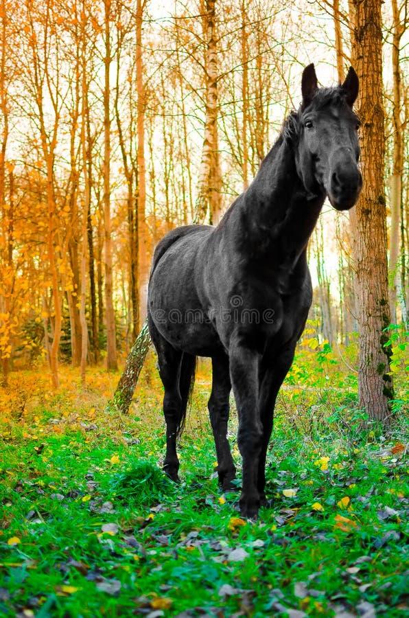 Häst som äter gräs i skogen, grund DOF-fokus på ögon fotografering för bildbyråer