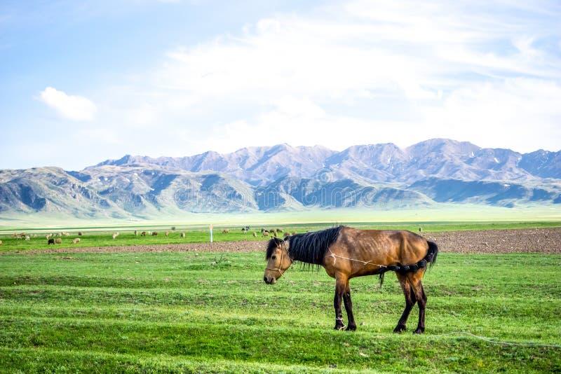 Häst som går till och med fältet arkivbild