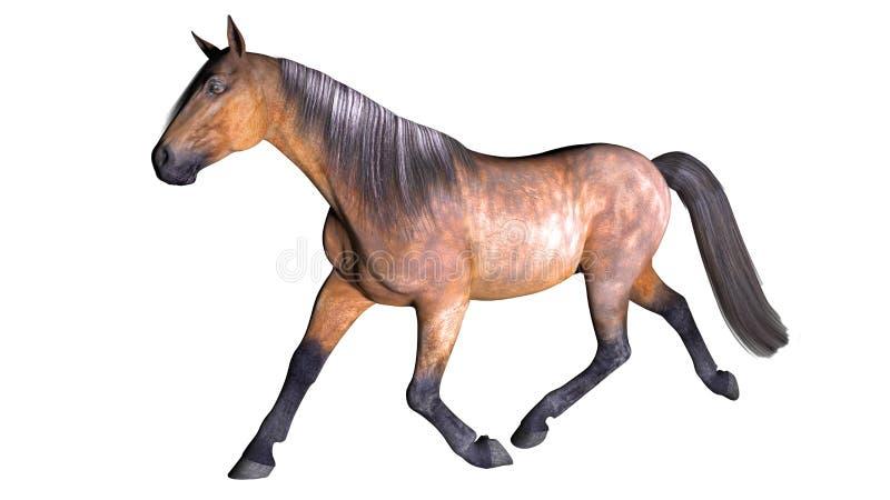 Häst som galopperar, traskat djur på vit vektor illustrationer