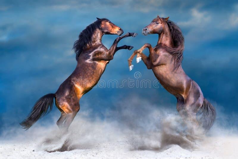Häst som två fostrar upp royaltyfria bilder