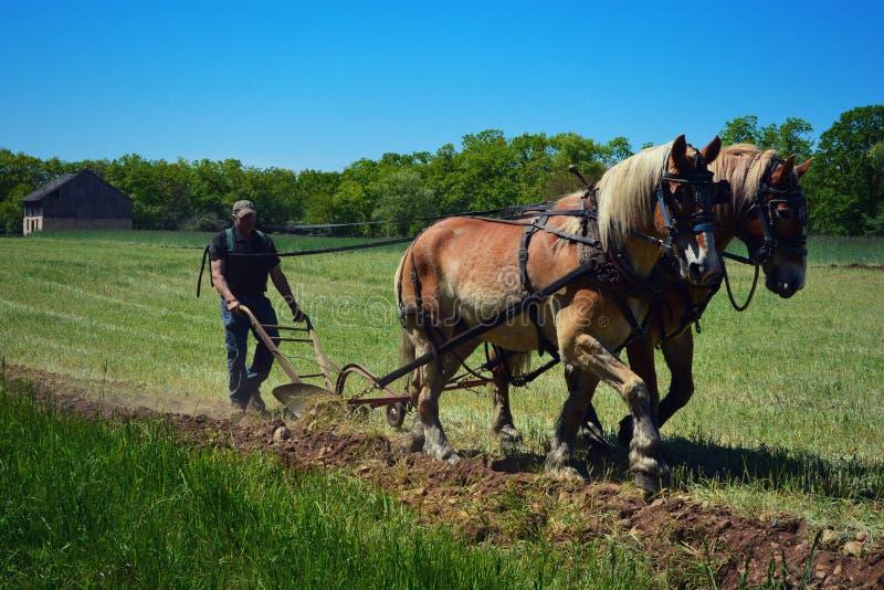 Häst Team Plowing fotografering för bildbyråer