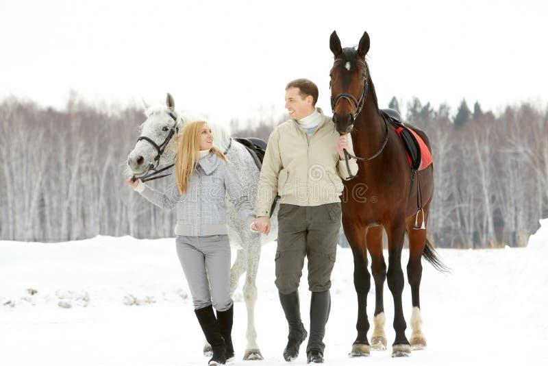 Häst-vänner royaltyfria foton