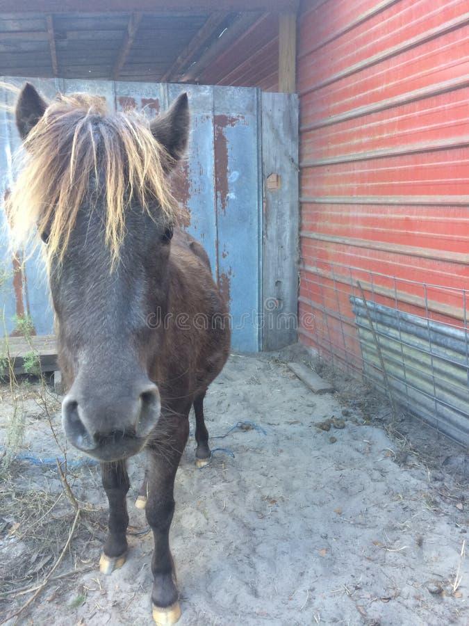 Häst vid en lada arkivbilder